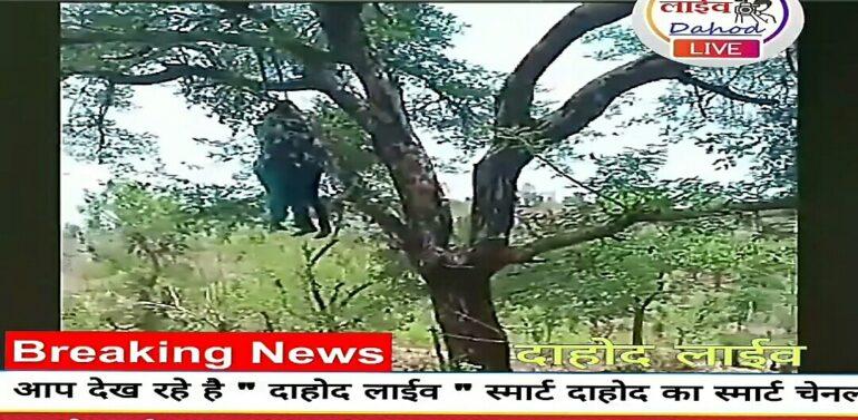 दाहोद जिले के देवगढ़ बारिया तालुका के एक गांव में प्रेमी युगल ने की आत्महत्या।
