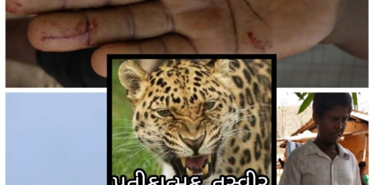 દે. બારીયા:બકરાં ચરાવતા યુવક પર દીપડાએ હુમલો કરી બે બકરાનું મારણ કર્યું