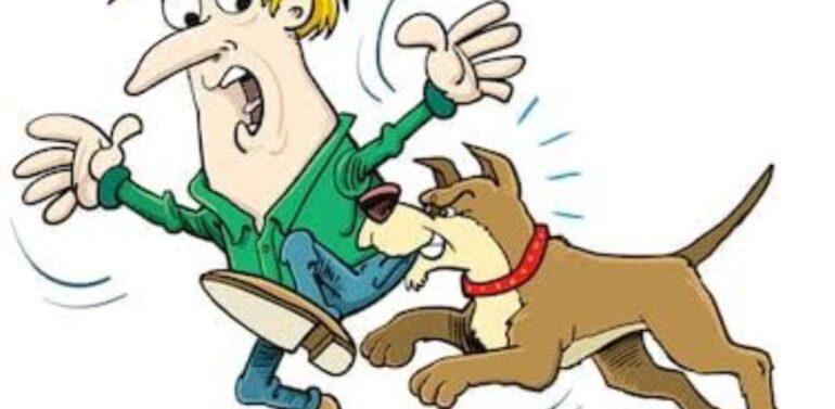 સિંગવડ તાલુકાના સિંગવડ ગામમાં હડકાયા કુતરાનો આતંક:ડઝનબંધ માણસો થયા હડકાયા કુતરાનો શિકાર