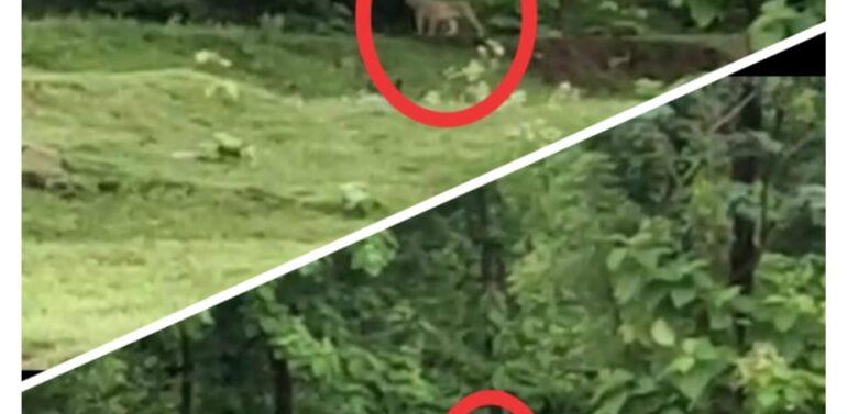સંતરામપુર નજીક ઘાટાવાડા આવેલા જંગલમાં એક સાથે બે દીપડા દેખાતા ગ્રામજનોમાં ભયનો માહોલ
