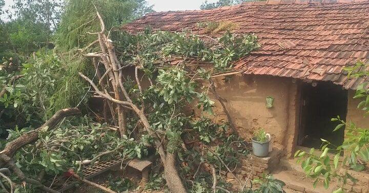 સંજેલી તાલુકામાં વાવાઝોડા સાથે વરસાદ વરસતા ગ્રામ્ય વિસ્તારોમાં થયું નુકસાન:મહાકાય વૃક્ષ મકાન પર પડ્યું,સદભાગ્યે કોઈ જાનહાની નહિ