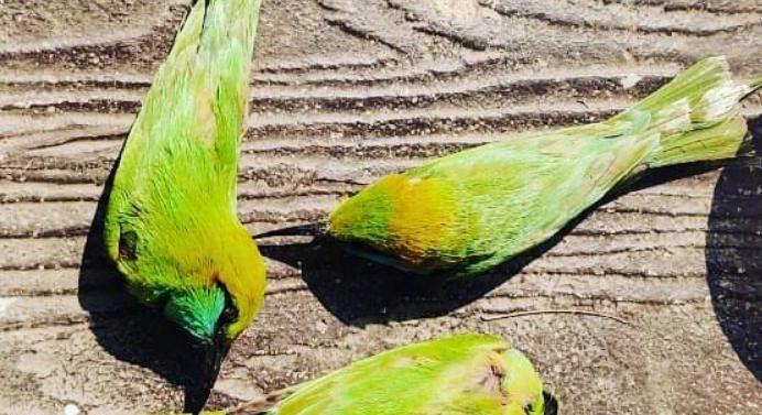 દાહોદ:બર્ડ ફલૂની આશંકાઓ વચ્ચે 4 પક્ષીઓના ભેદી મોત થતા ખળભળાટ:મૃતક પક્ષીઓના સેમ્પલ પૃથ્થકરણ માટે બહાર મોકલાયાં